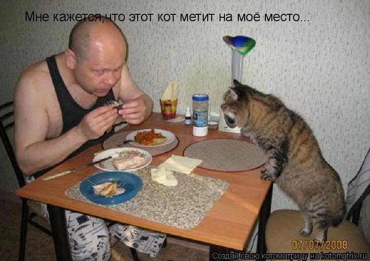 Котоматрица: Мне кажется,что этот кот метит на моё место...
