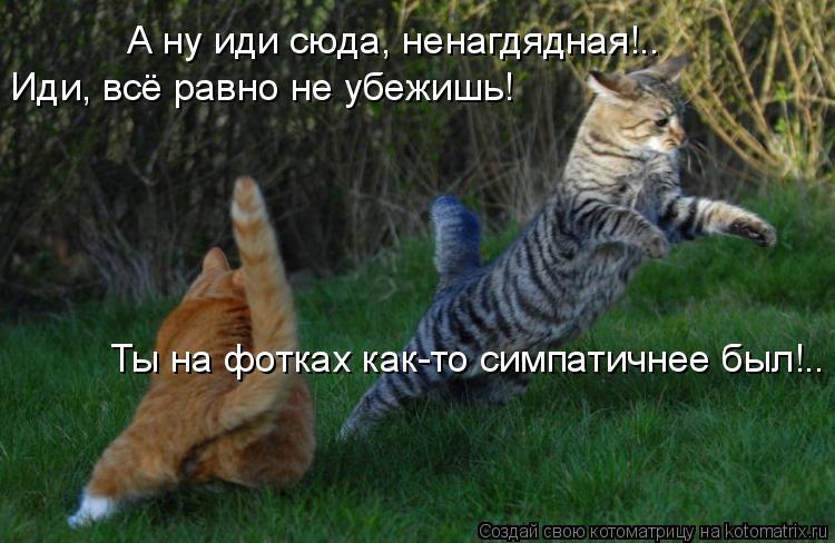 Котоматрица: А ну иди сюда, ненагдядная!.. Иди, всё равно не убежишь! Ты на фотках как-то симпатичнее был!..