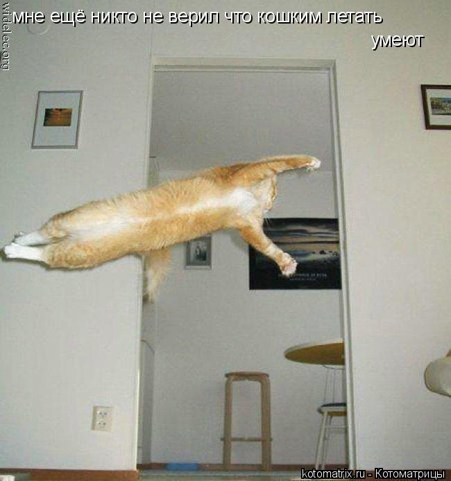 Котоматрица: мне ещё никто не верил что кошким летать  умеют