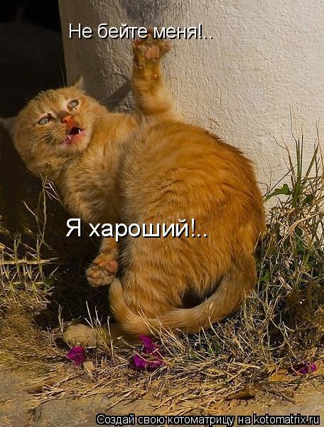 Котоматрица: Не бейте меня!.. Я хароший!..