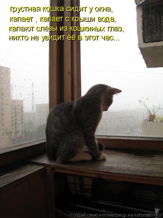 Котоматрица: грустная кошка сидит у окна, капает , капает с крыши вода, капают слёзы из кошкиных глаз, никто не увидит её в этот час...