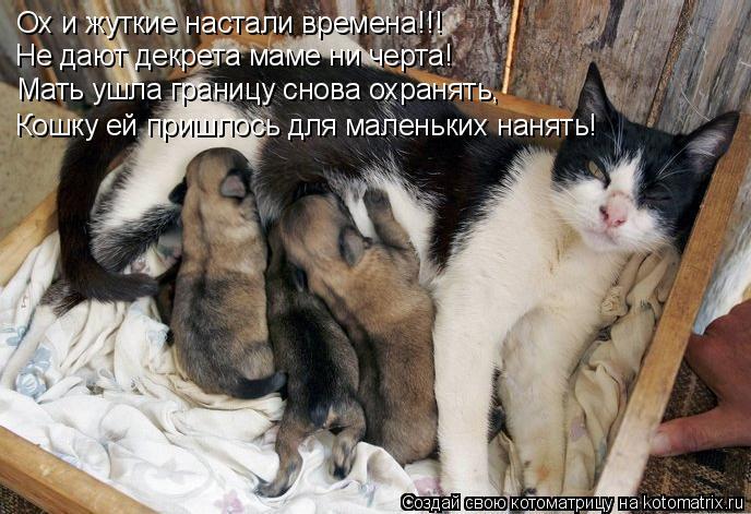 Котоматрица: Ох и жуткие настали времена!!! Не дают декрета маме ни черта! Мать ушла границу снова охранять, Кошку ей пришлось для маленьких нанять!