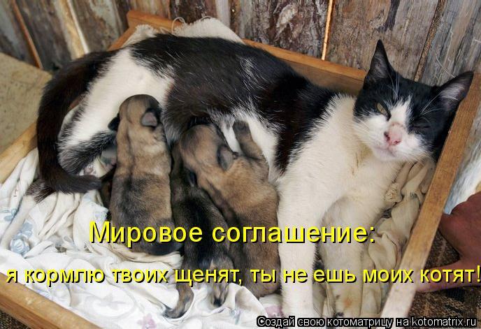Котоматрица: Мировое соглашение:  я кормлю твоих щенят, ты не ешь моих котят!