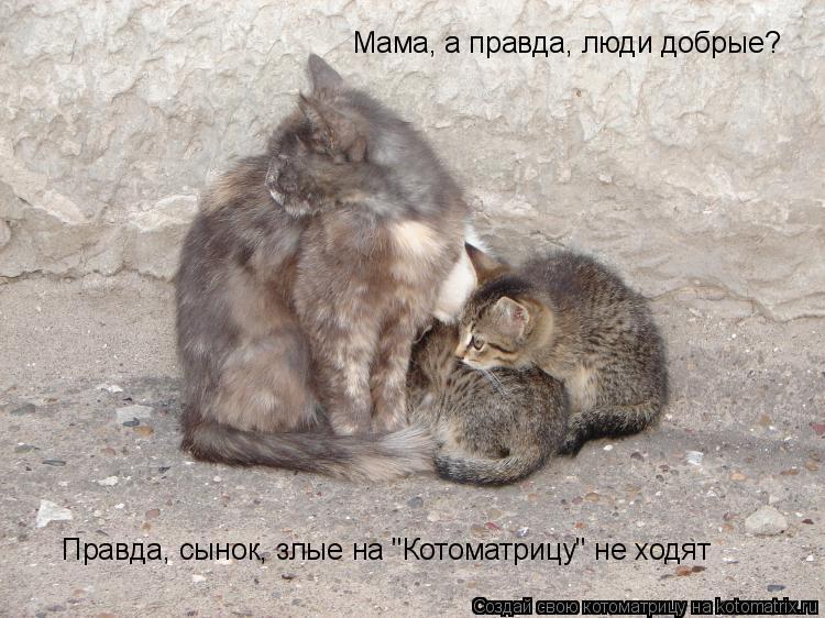 """Котоматрица: Мама, а правда, люди добрые? Правда, сынок, злые на """"Котоматрицу"""" не ходят"""