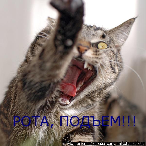 Котоматрица: РОТА, ПОДЪЕМ!!!