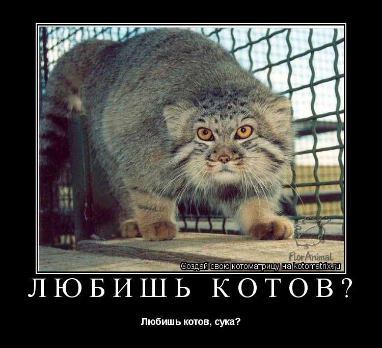 Котоматрица: Любишь котов? Любишь котов, сука?