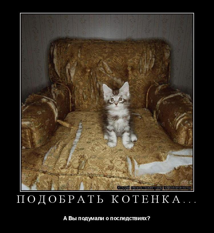 Котоматрица: Подобрать котёнка... А Вы подумали о последствиях?