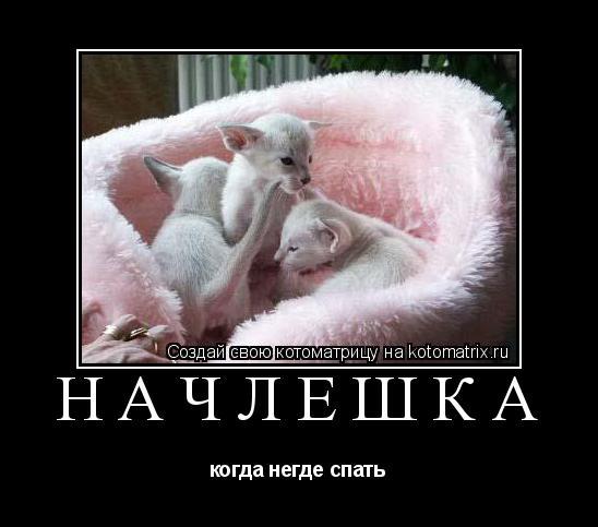Котоматрица: начлешка когда негде спать
