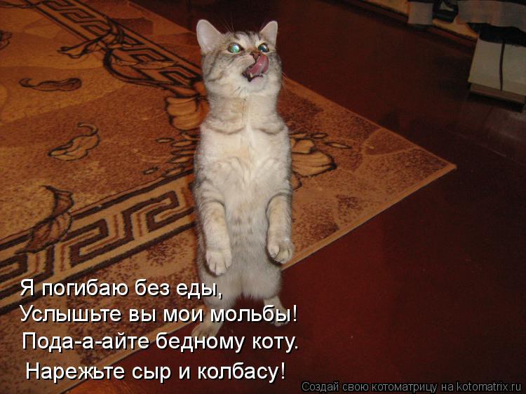 Котоматрица: Я погибаю без еды, Услышьте вы мои мольбы!  Пода-а-айте бедному коту. Нарежьте сыр и колбасу!