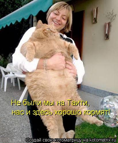Котоматрица: Не были мы на Таити, нас и здесь хорошо кормят!