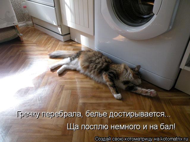 Котоматрица: Гречку перебрала, белье достирывается...  Ща посплю немного и на бал!
