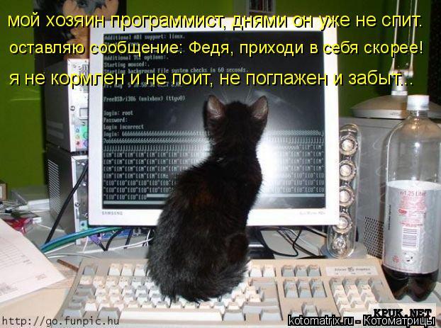 Котоматрица: мой хозяин программист, днями он уже не спит.  оставляю сообщение: Федя, приходи в себя скорее! я не кормлен и не поит, не поглажен и забыт...
