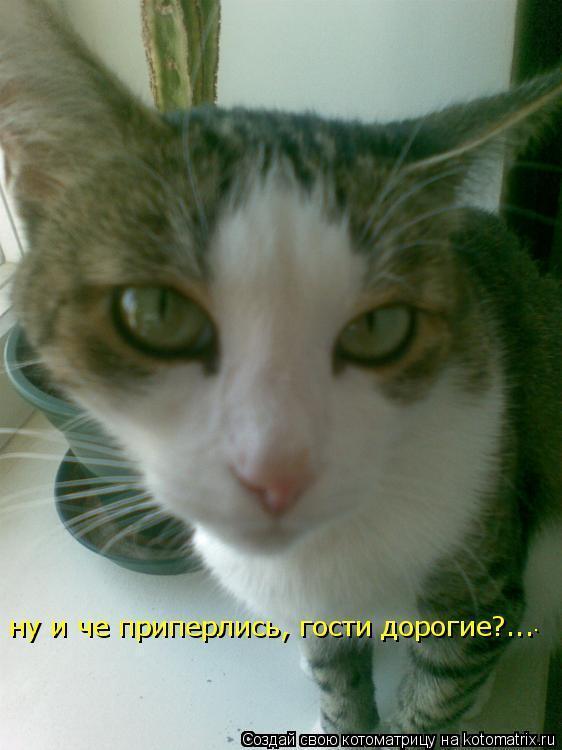 Котоматрица: .