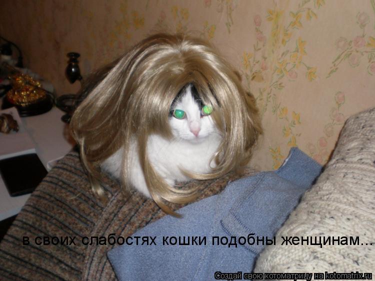 Котоматрица: в своих слабостях кошки подобны женщинам...