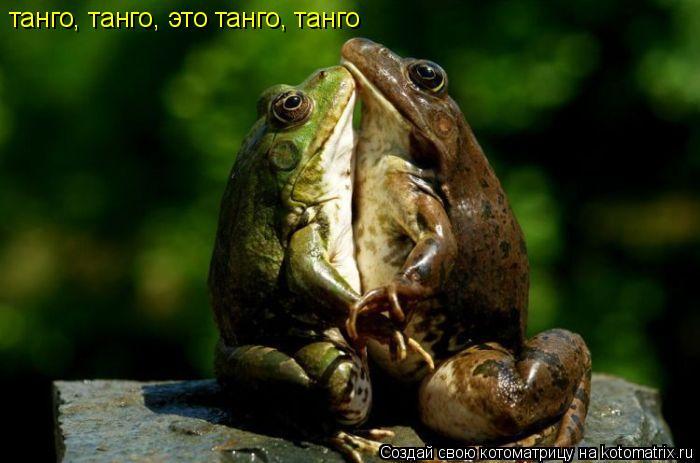 Котоматрица: танго, танго, это танго, танго