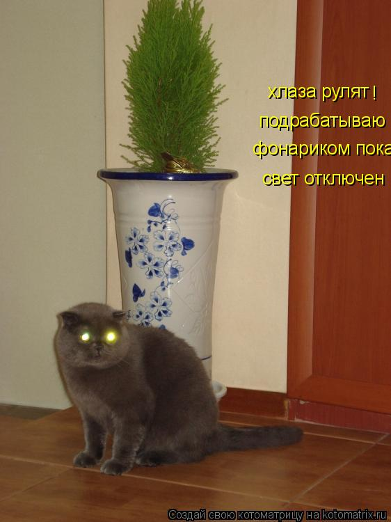 Котоматрица: хлаза рулят  подрабатываю    фонариком пока свет отключен !