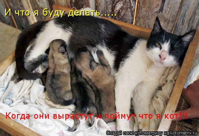 Котоматрица: И что я буду делать..... Когда они вырастут и поймут что я кот!!!