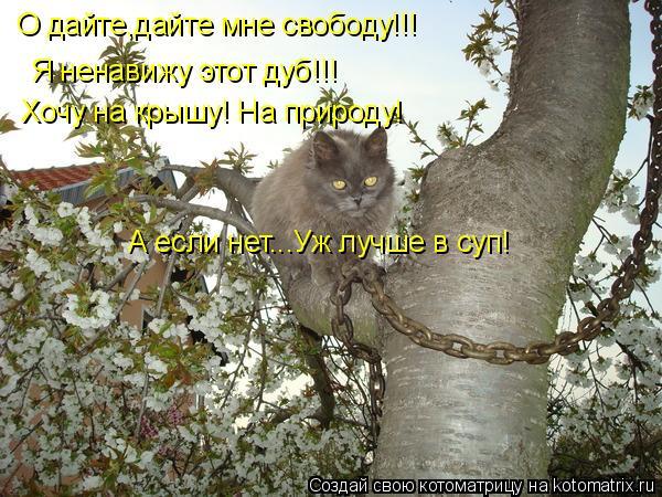 Котоматрица: О дайте,дайте мне свободу!!! Я ненавижу этот дуб!!! Хочу на крышу! На природу! А если нет...Уж лучше в суп!