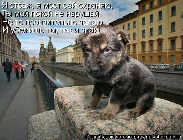 Котоматрица: Я страж, я мост сей охраняю, Не то пронзительно залаю И убежишь ты, так и знай! Ты мой покой не нарушай,