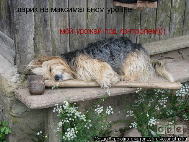 Котоматрица: шарик на максимальном уровне... мой урожай под контролем)))