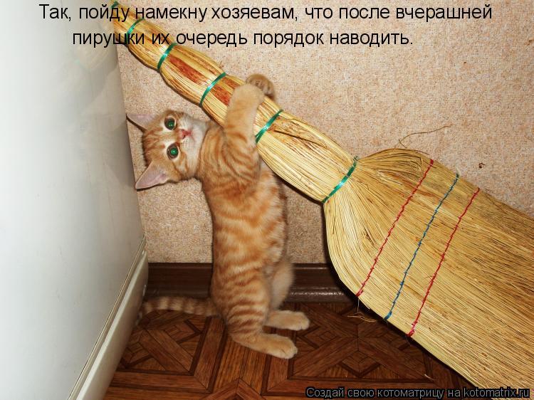 Котоматрица: Так, пойду намекну хозяевам, что после вчерашней пирушки их очередь порядок наводить.