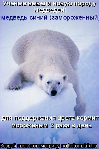 Котоматрица: Ученые вывели новую породу медведей: медведь синий (замороженный) для поддержания цвета кормить мороженым 3 раза в день