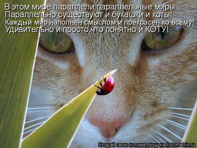 Котоматрица: В этом мире параллели,параллельные миры.... Параллельно существуют и букашки и коты! Каждый мир наполнен смыслом,и прекрасен ко всему! Удиви