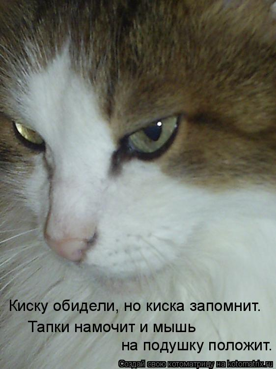 Котоматрица: Киску обидели, но киска запомнит. Тапки намочит и мышь на подушку положит.