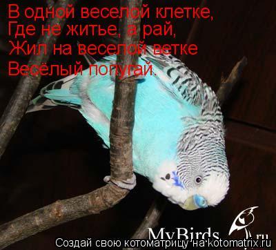 Котоматрица: В одной веселой клетке,  Где не житье, а рай,  Жил на веселой ветке Весёлый попугай.