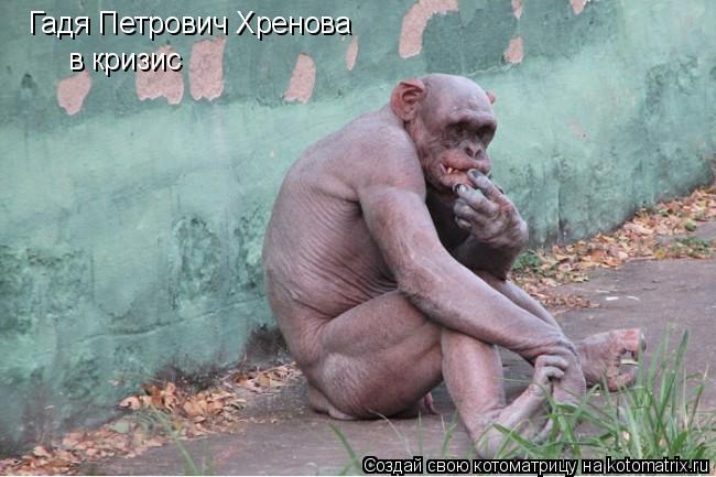 Котоматрица: Гадя Петрович Хренова в кризис