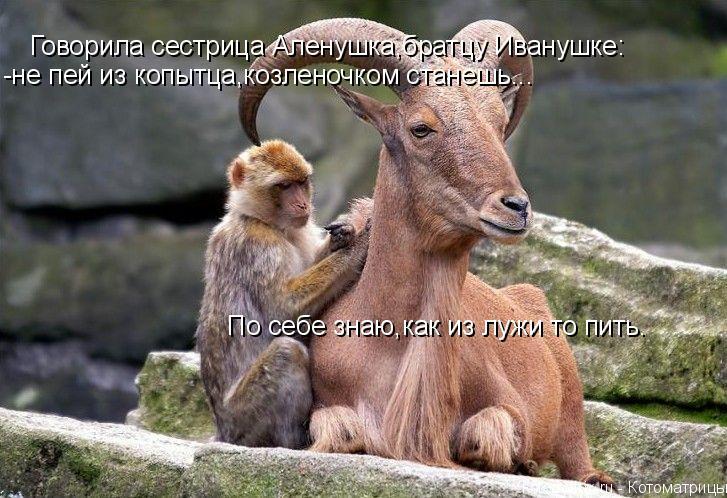 Котоматрица: Говорила сестрица Аленушка,братцу Иванушке: -не пей из копытца,козленочком станешь... По себе знаю,как из лужи то пить.