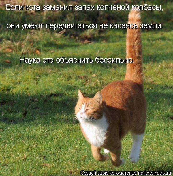 Котоматрица: Если кота заманил запах копчёной колбасы, они умеют передвигаться не касаясь земли. Наука э Наука это объяснить бессильно.