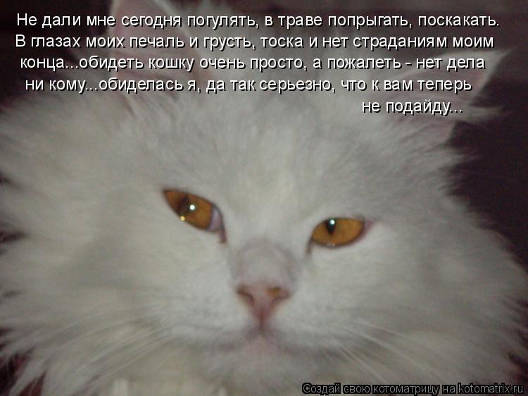 Котоматрица: Не дали мне сегодня погулять, в траве попрыгать, поскакать. В глазах моих печаль и грусть, тоска и нет страданиям моим конца...обидеть кошку о