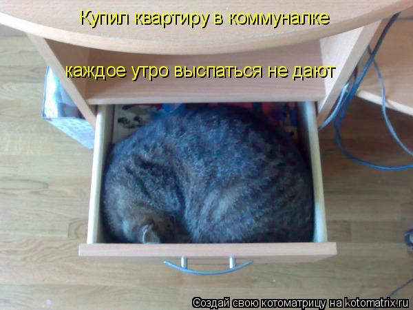 Котоматрица: Купил квартиру в коммуналке каждое утро выспаться не дают