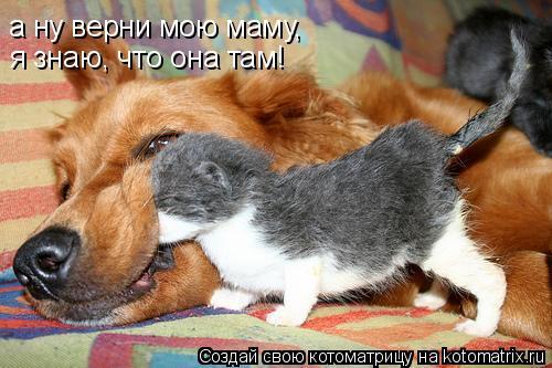 Котоматрица: а ну верни мою маму,  я знаю, что она там!