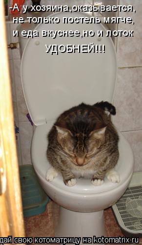 Котоматрица: -А у хозяина,оказывается, не только постель мягче, и еда вкуснее,но и лоток УДОБНЕЙ!!!