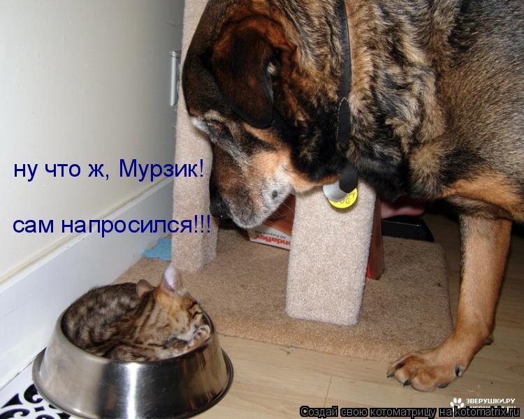 Котоматрица: ну что ж, Мурзик! сам напросился!!!