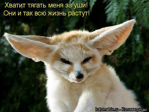 Котоматрица: Хватит тягать меня за уши! Они и так всю жизнь растут! Хватит тягать меня за уши!  Они и так всю жизнь растут!