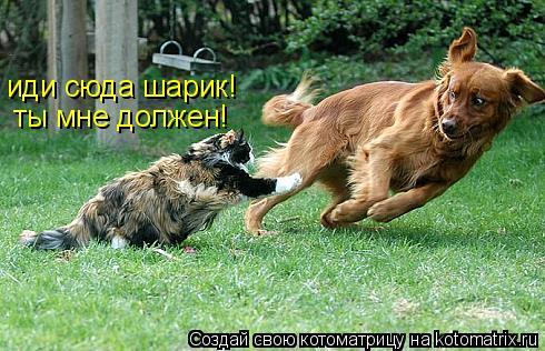 Котоматрица: иди сюда шарик! ты мне должен!