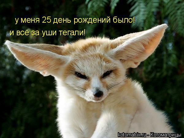 Котоматрица: у меня 25 день рождений было! и всё за уши тегали!