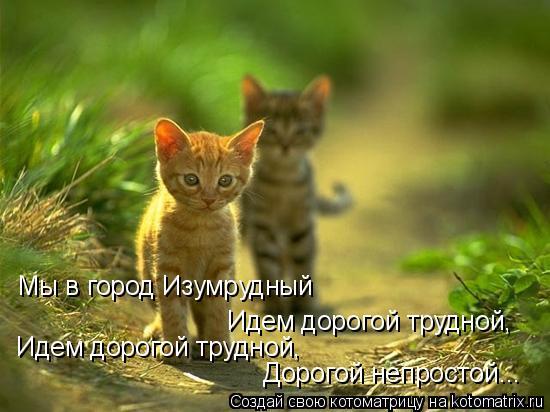 Котоматрица: Мы в город Изумрудный Идем дорогой трудной, Идем дорогой трудной, Дорогой непростой...