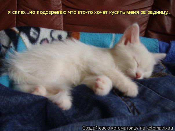 Котоматрица: я сплю...но подозреваю что кто-то хочет кусить меня за задницу...