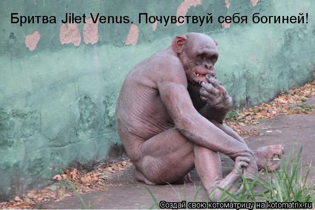 Котоматрица: Бритва Jilet Venus. Почувствуй себя богиней!