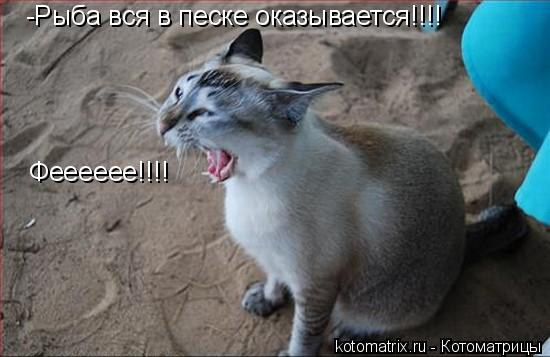 Котоматрица: -Рыба вся в песке оказывается!!!! Фееееее!!!!