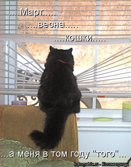 """Котоматрица: ....Март..... ....весна..... ....кошки..... ...а меня в том году """"того""""..."""