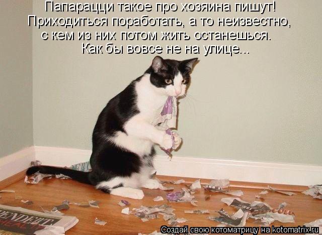 Котоматрица: Папарацци такое про хозяина пишут! Приходиться поработать, а то неизвестно,  с кем из них потом жить останешься. Как бы вовсе не на улице...