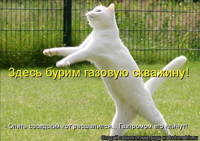 Котоматрица: Здесь бурим газовую скважину! - Опять соседский кот расшалился... Газпромом его кличут!