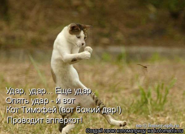Котоматрица: Удар, удар... Еще удар.. Опять удар - и вот Кот Тимофей (вот божий дар!) Проводит апперкот!