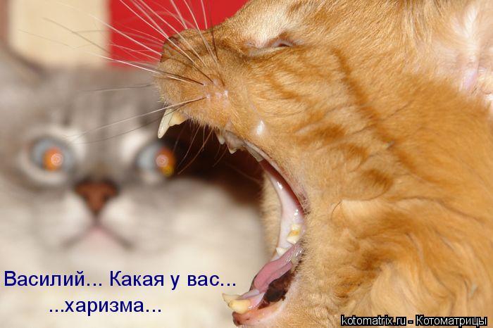 Котоматрица: Василий... Какая у вас... ...харизма...
