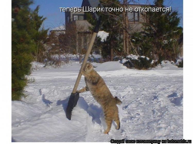 Котоматрица: теперь Шарик точно не откопается!